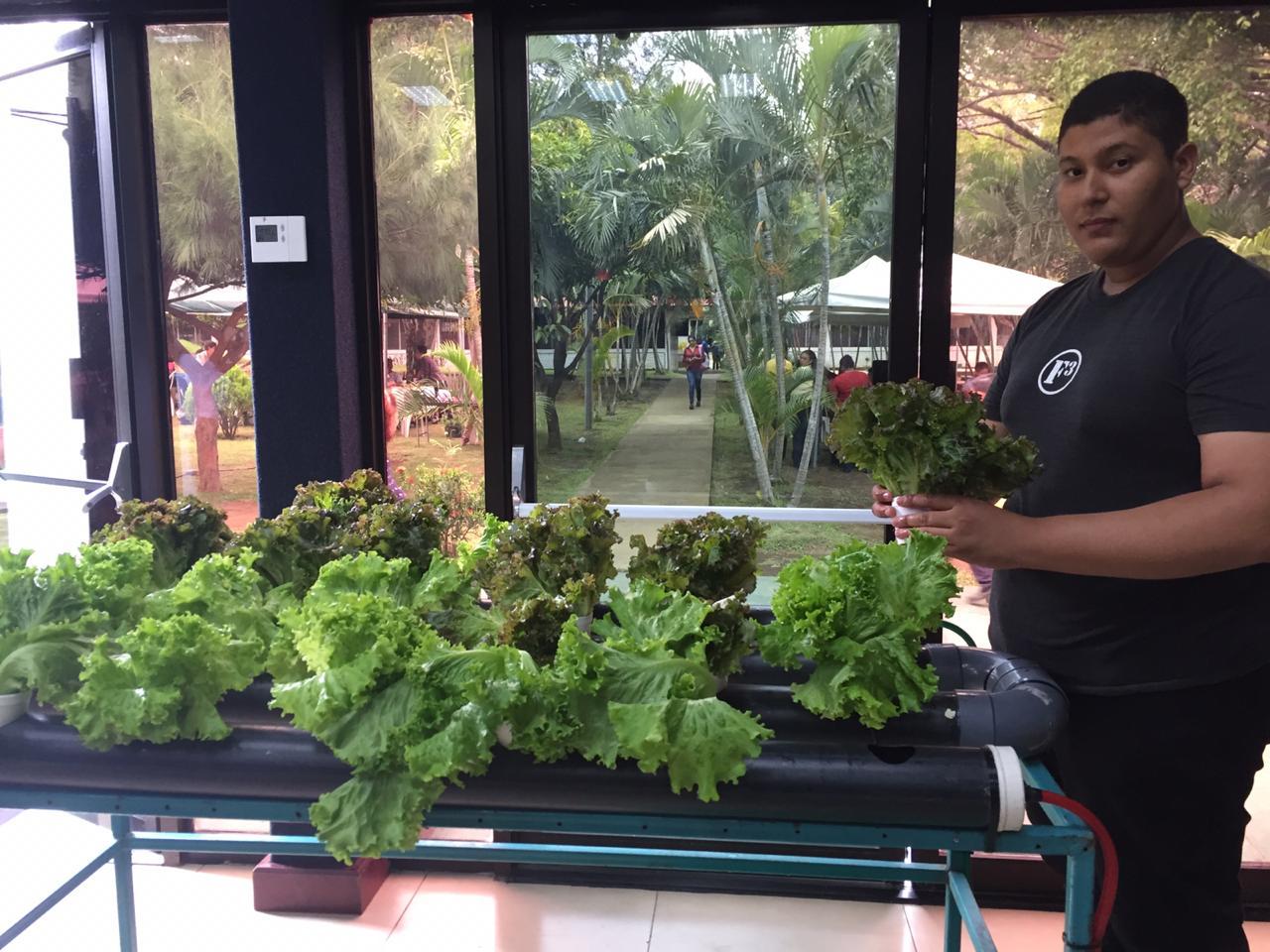 Sistema de Cultivo Hidropónico, una iniciativa integrada por un joven de Managua